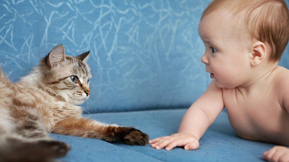 Нужны ли звуки животных для малышей