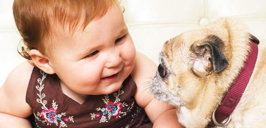 Звуки домашних животных для обучения