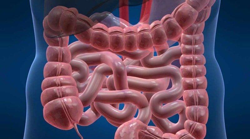 Влияние антибиотиков на кишечную флору