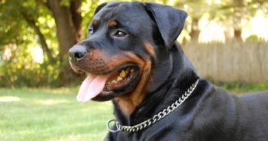 3 важных действия при укусе собакой