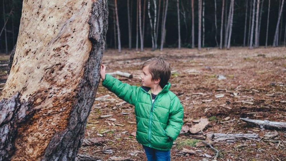 Ребенок потерялся в лесу