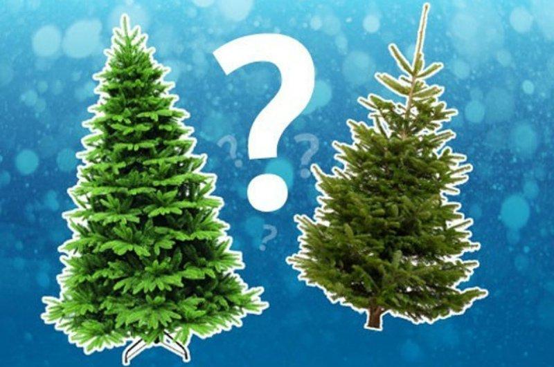 Какая елка лучше - натуральная или искусственная?