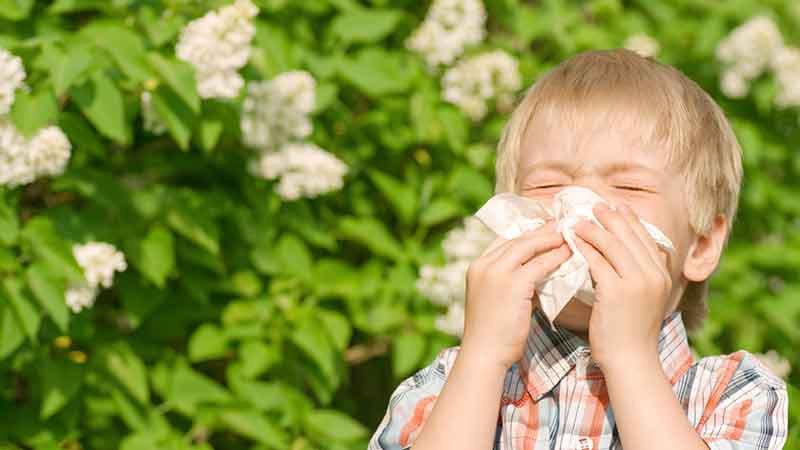 Поллиноз у детей признаки и лечение