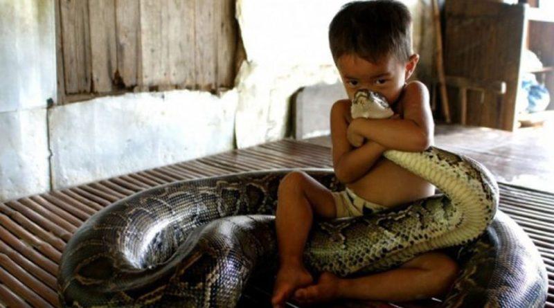 укус змеи