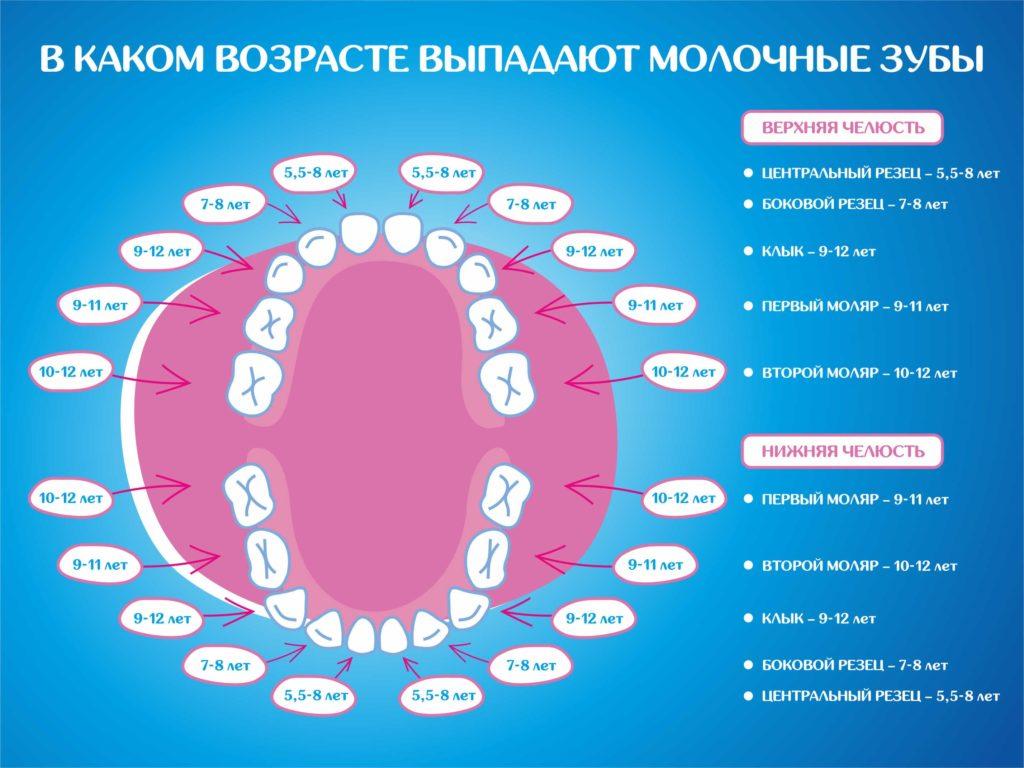 Когда выпадают молочные зубы?