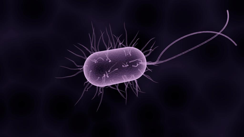 Бактериальная этиология