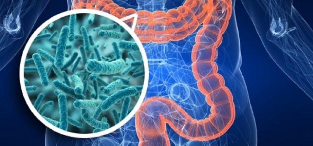 Функции кишечника